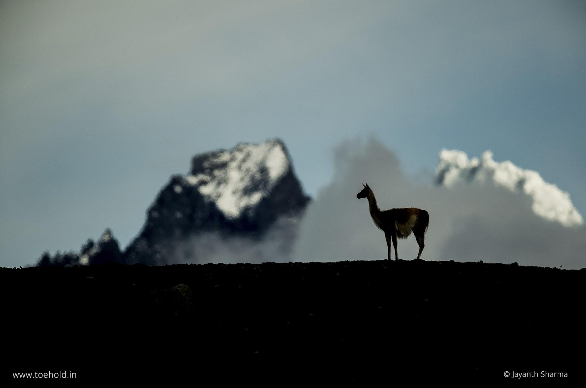 4 guanaco silhoutte patagonia 2021