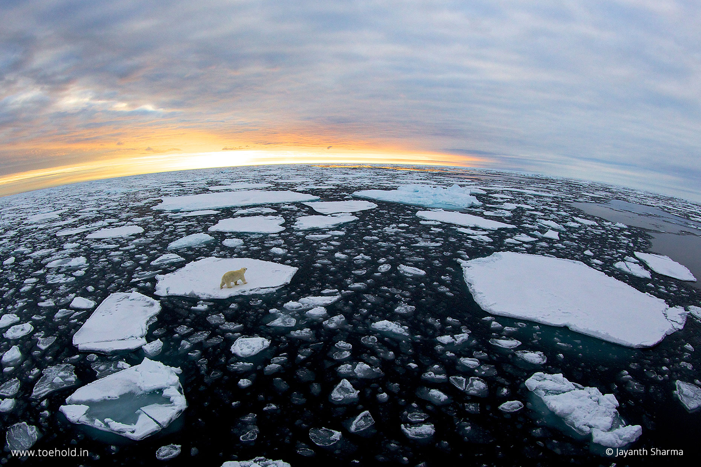 polar bear svalbard 1 2021
